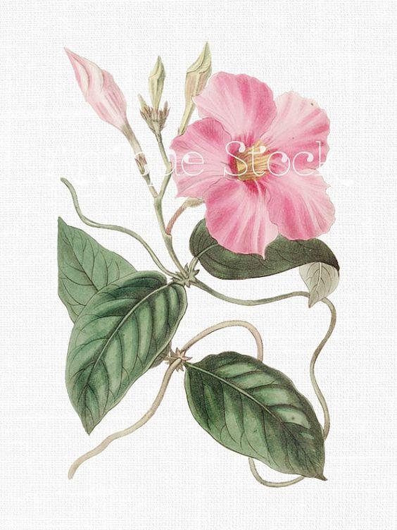 Flower clipart, Flower and Etsy on Pinterest.