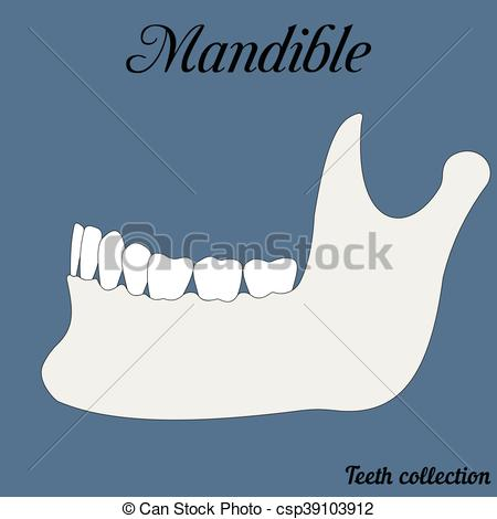 Vector Clip Art of mandible.