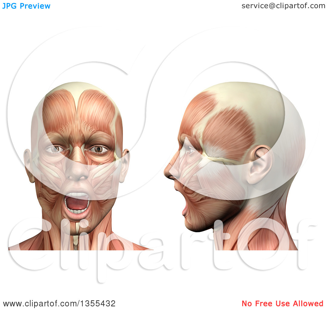 Clipart of a 3d Anatomical Man with Visible Muscles, Showing.