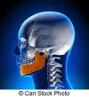 Mandible Illustrations and Clipart. 551 Mandible royalty free.