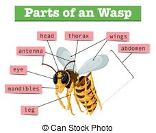 Insect mandibles Vector Clipart EPS Images. 62 Insect mandibles.