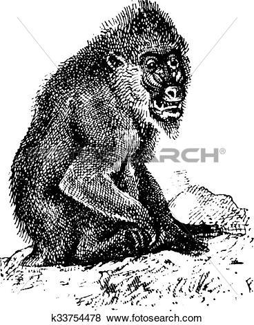 Clip Art of Mandrill or mandrill Mandrillus sphinx, vintage.