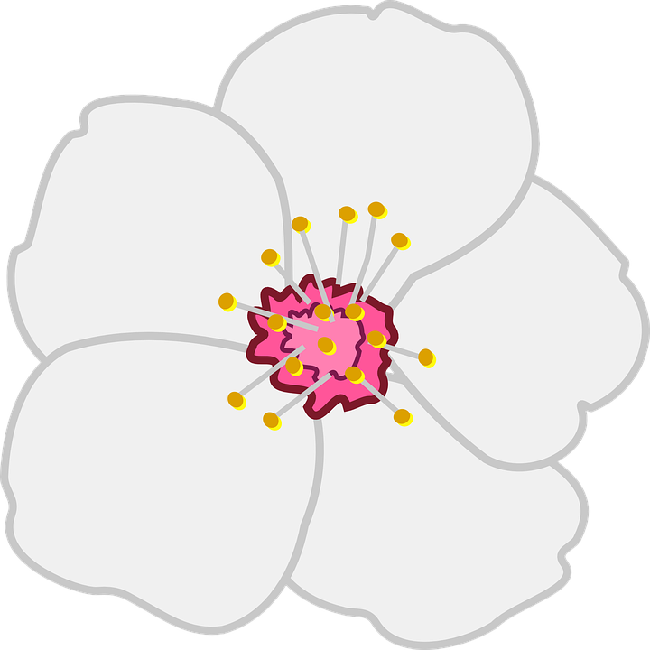 Free vector graphic: Almond, Flower, Blossom, White.