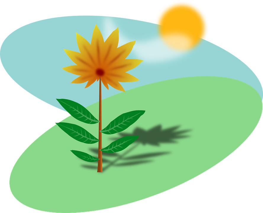 Free vector graphic: Spring, Flower, Yellow, Sun.