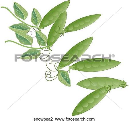 Clip Art of Snow Peas snowpea2.