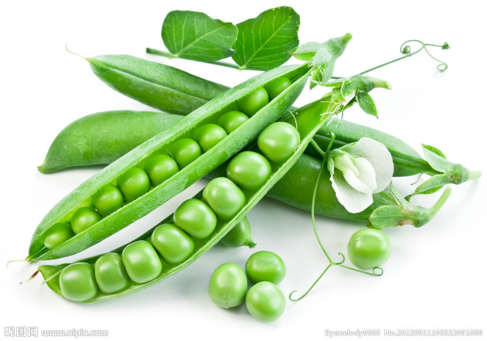 Compare Prices on Planting Snow Peas.