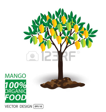 Mango Tree Images & Stock Pictures. Royalty Free Mango Tree Photos.