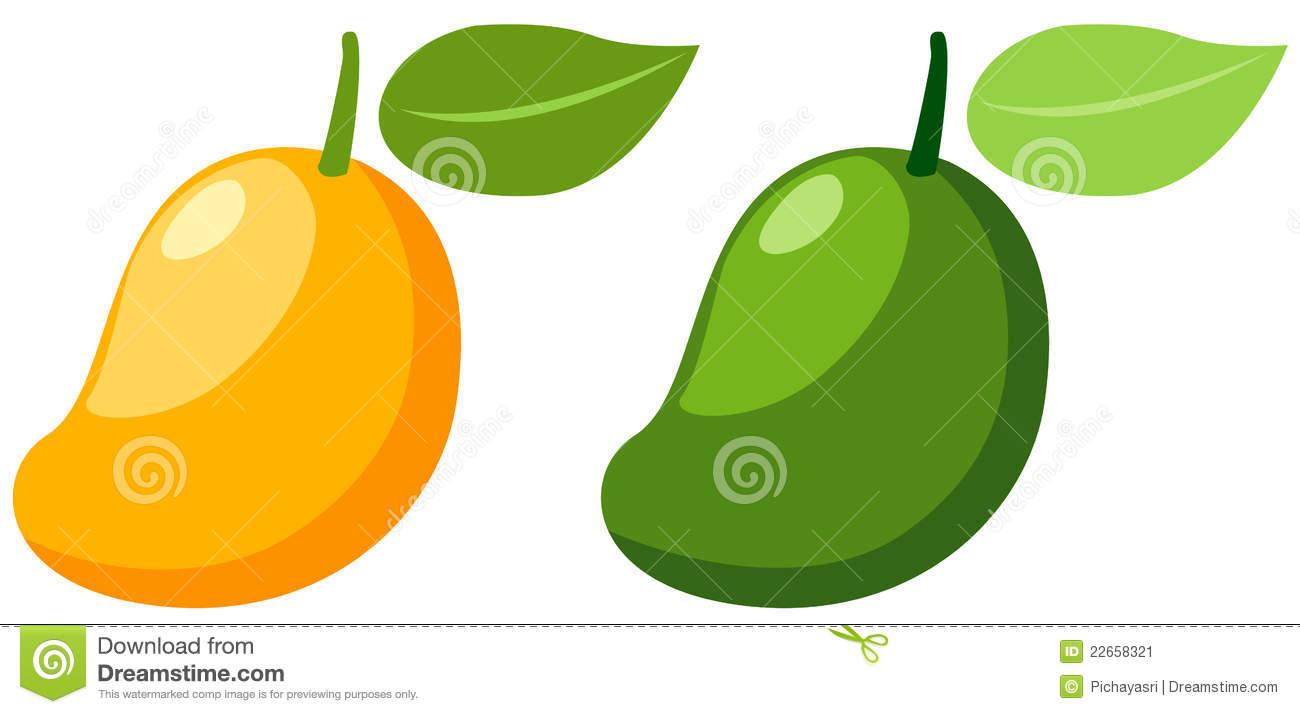 Mangoes Stock Illustrations.