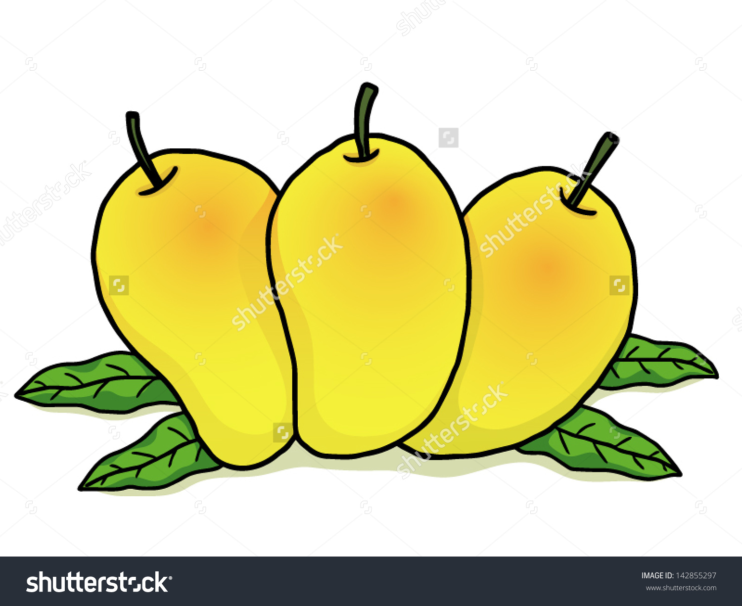 Three Ripe Mangoes Some Green Leaves Stock Vector 142855297.