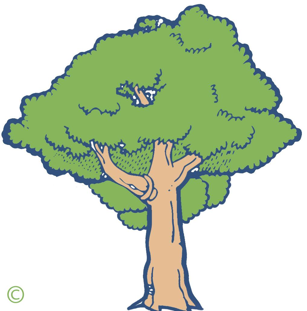 Mango Tree Clipart.