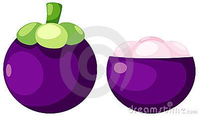 Mangosteen Illustration Stock Photo.