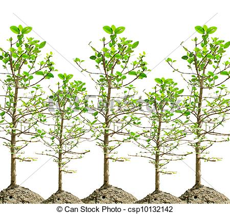 Mangroves Illustrations and Clipart. 111 Mangroves royalty free.