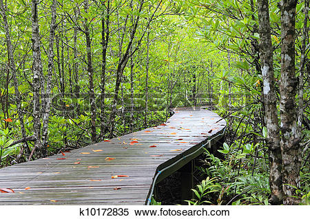 Stock Image of Wood path way among the Mangrove forest, Thailand.