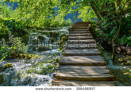 Beautiful Green Mangrove Forest Boardwalk Zanzibar Stock Photo.