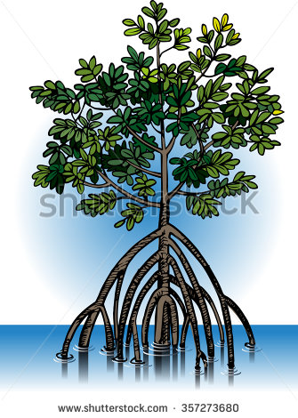 Mangrove forest clipart.