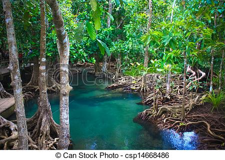 Pictures of The root and crystal stream of the mangrove forest.