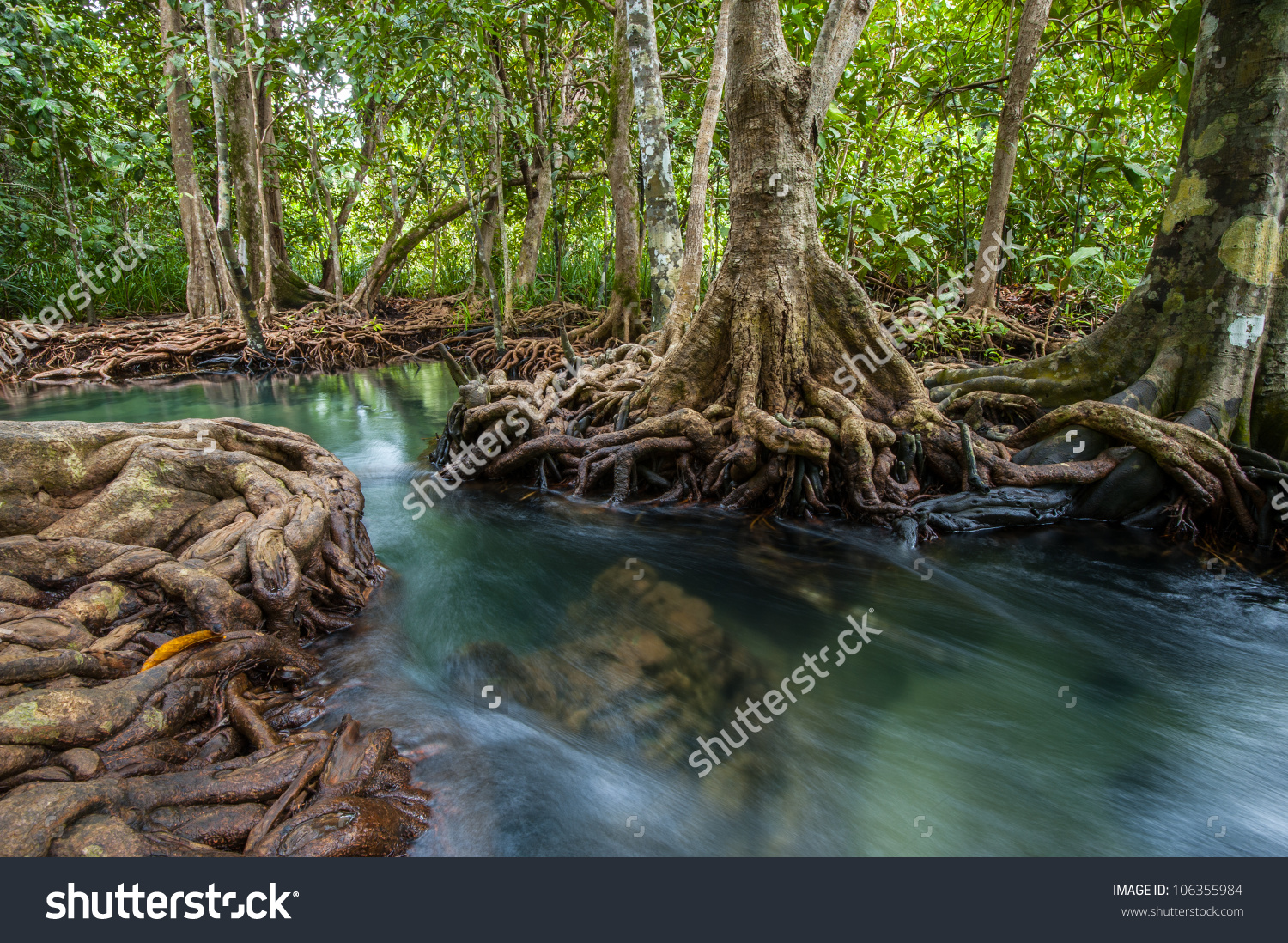 Mangrove Forests River Green Tree Stock Photo 106355984.