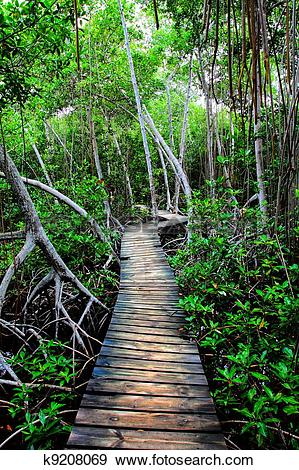 Stock Photograph of Mangrove forest in Colombia. HDR image.