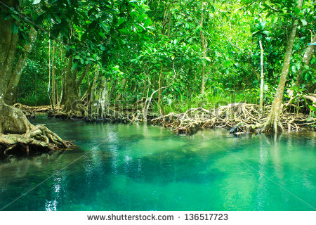 Mangrove Forest Stock Photos, Royalty.