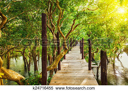 Stock Image of Wooden bridge in flooded rain forest jungle of.