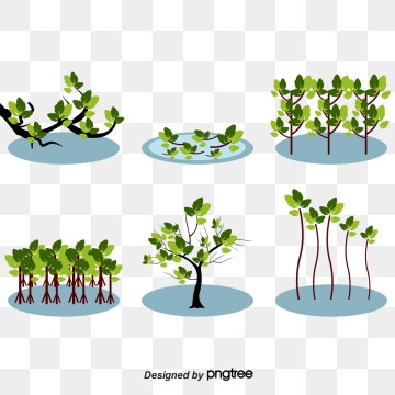 Mangrove PNG Images.