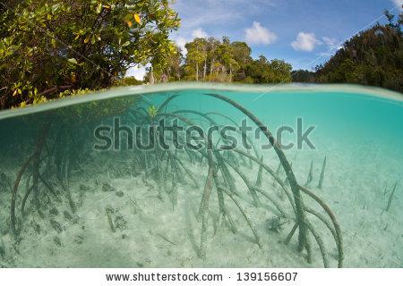 Mangrove Pneumatophore Roots Stick Sand Like Stock Photo 139574804.