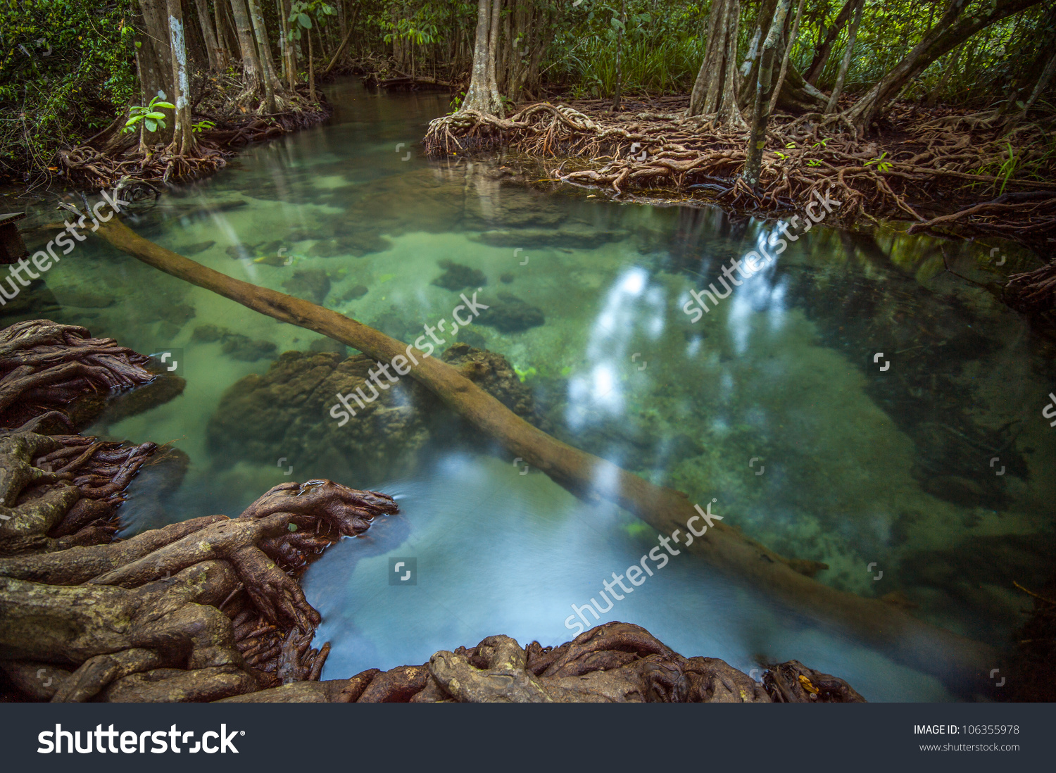 Mangrove Forests With Pond Stock Photo 106355978 : Shutterstock.