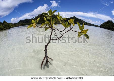 Mangrove Underwater Stock Photos, Royalty.