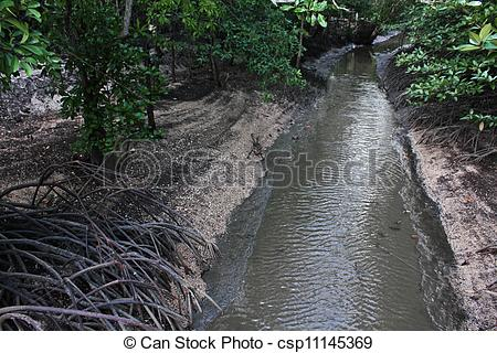 Stock Image of Mangrove forest called Black Sand Beach (Haad sai.