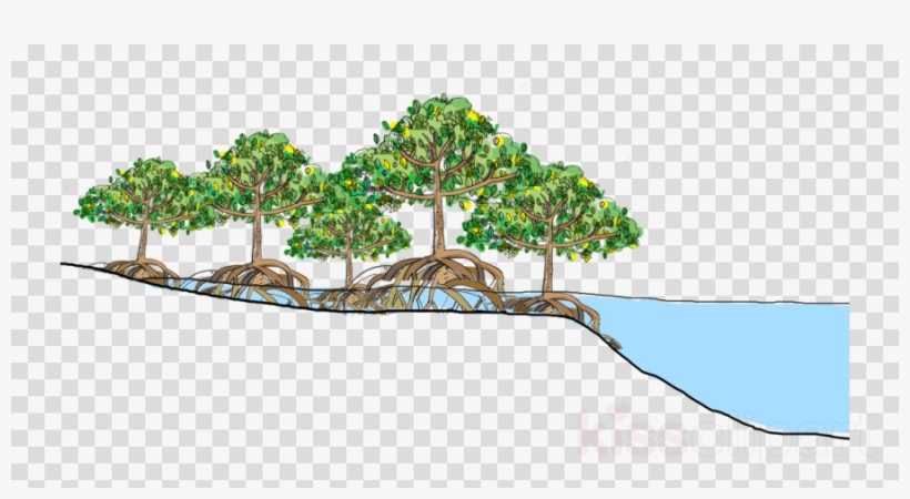 Download Mangrove Forest Vector Clipart Mangrove Tropical.