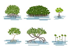 Mangrove Free Vector Art.