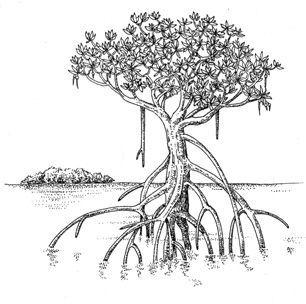 Mangrove Tree Tattoo.
