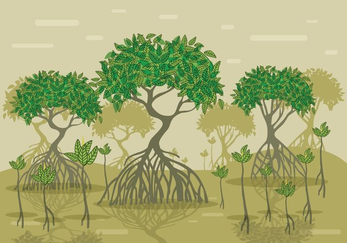 Mangrove Vector Forest in 2019.