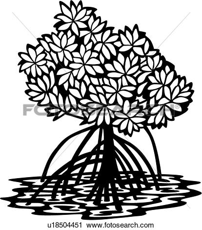 Clipart of , mangrove, tree, varieties, u18504451.