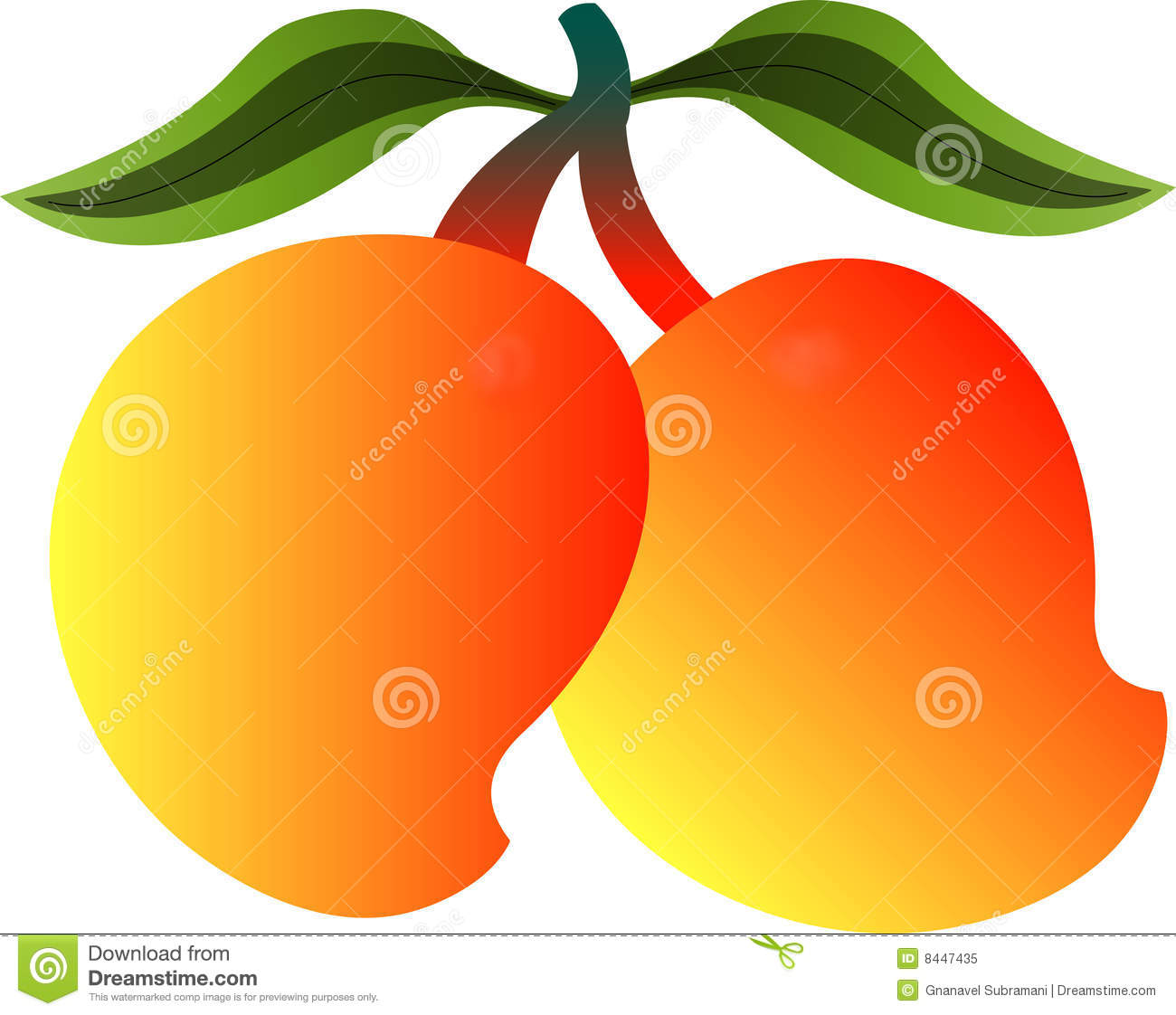 Mango Stock Illustrations.