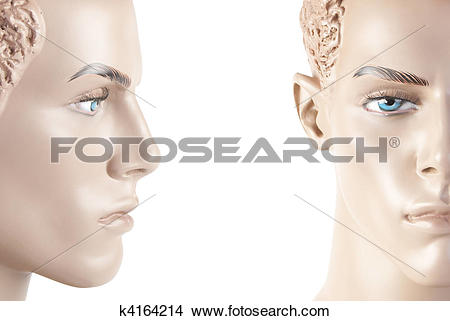 Stock Photo of Male mannequin face.