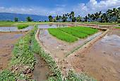 Stock Photo of Maninjau and Maninjau Lake, Sumatra, Indonesia.