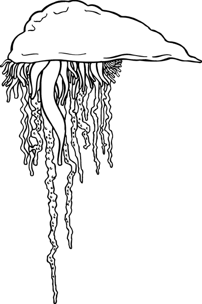Jellyfish Clip Art Download.