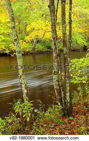 Stock Photography of Fenton River along Nipmuck Trail, Mansfield.