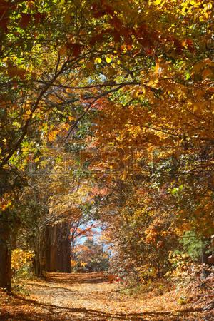 Deciduous Foliage Stock Photos, Pictures, Royalty Free Deciduous.