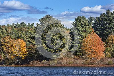 Bright Fall Foliage Along Shoreline Of Lake, Mansfield Hollow, C.