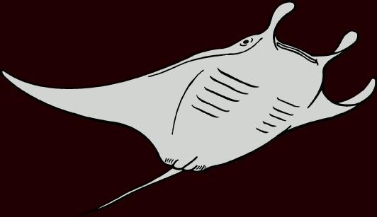 Manta ray clipart.