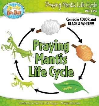 Praying Mantis Life Cycle Clip Art Set — Comes In Color and Black.