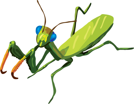 Gallery For > Mantis Cartoon Clipart.