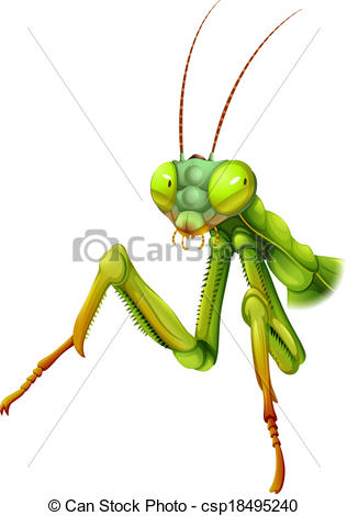EPS Vector of A praying mantis.