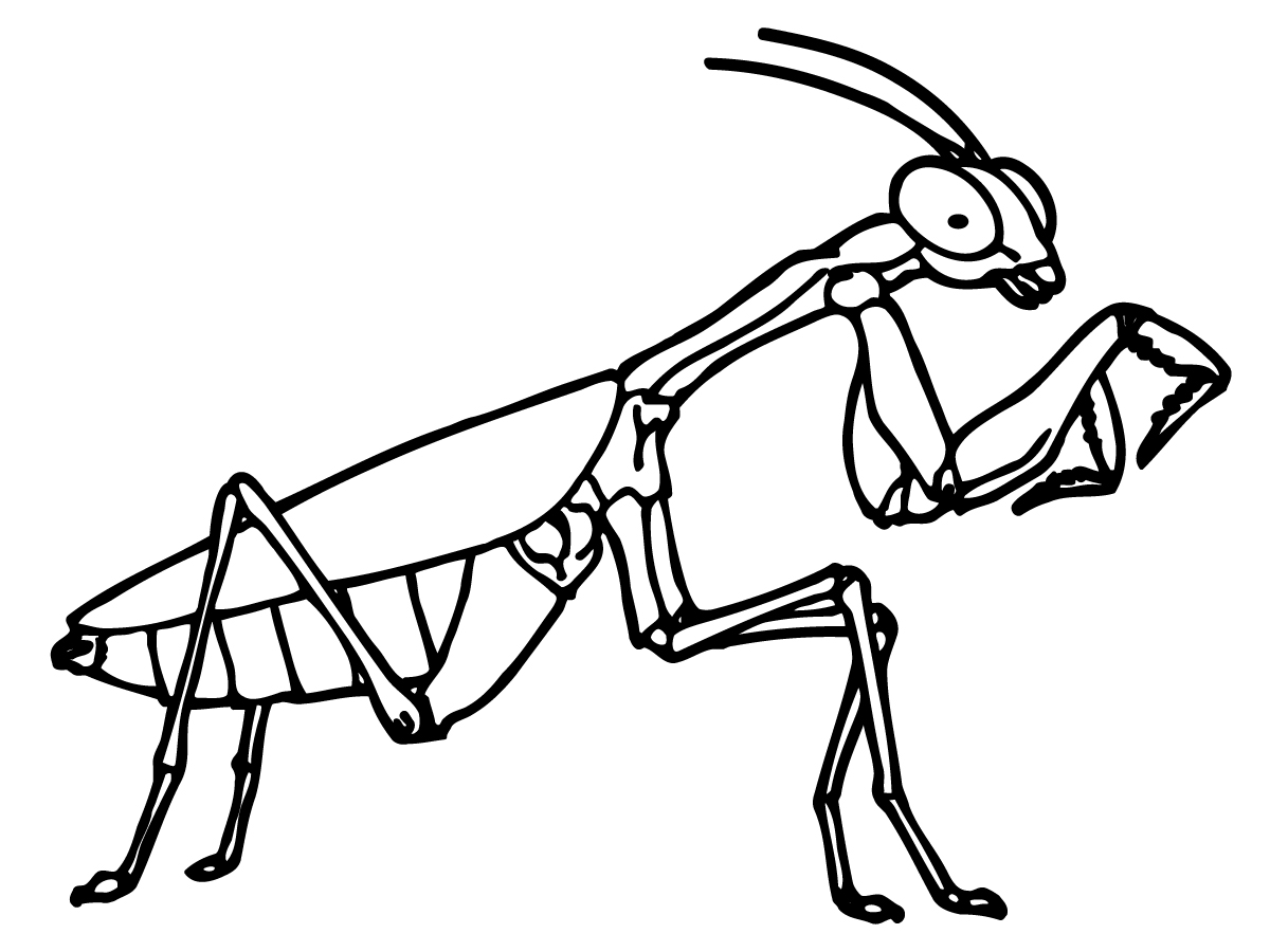 Praying Mantis Clipart.