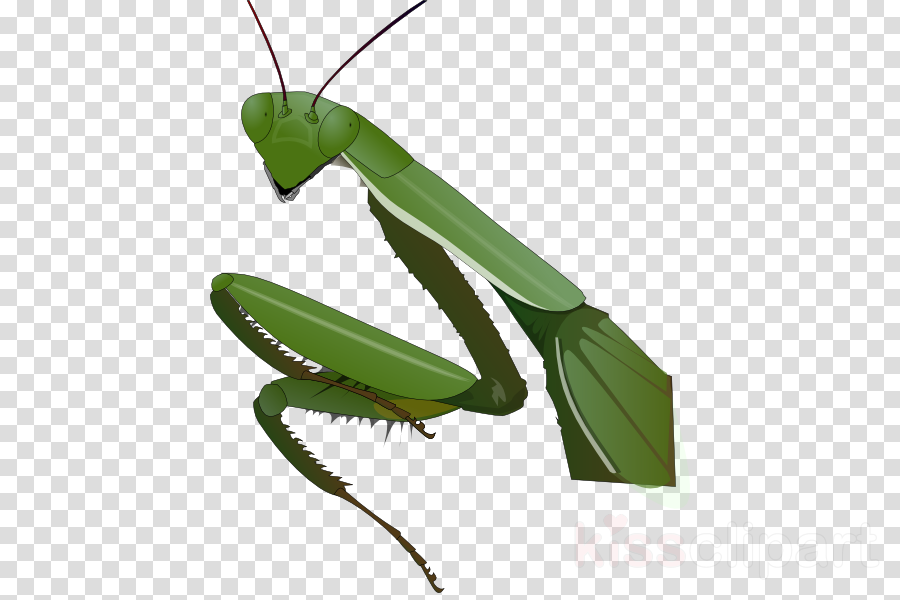 praying mantis clipart Mantis Clip art clipart.