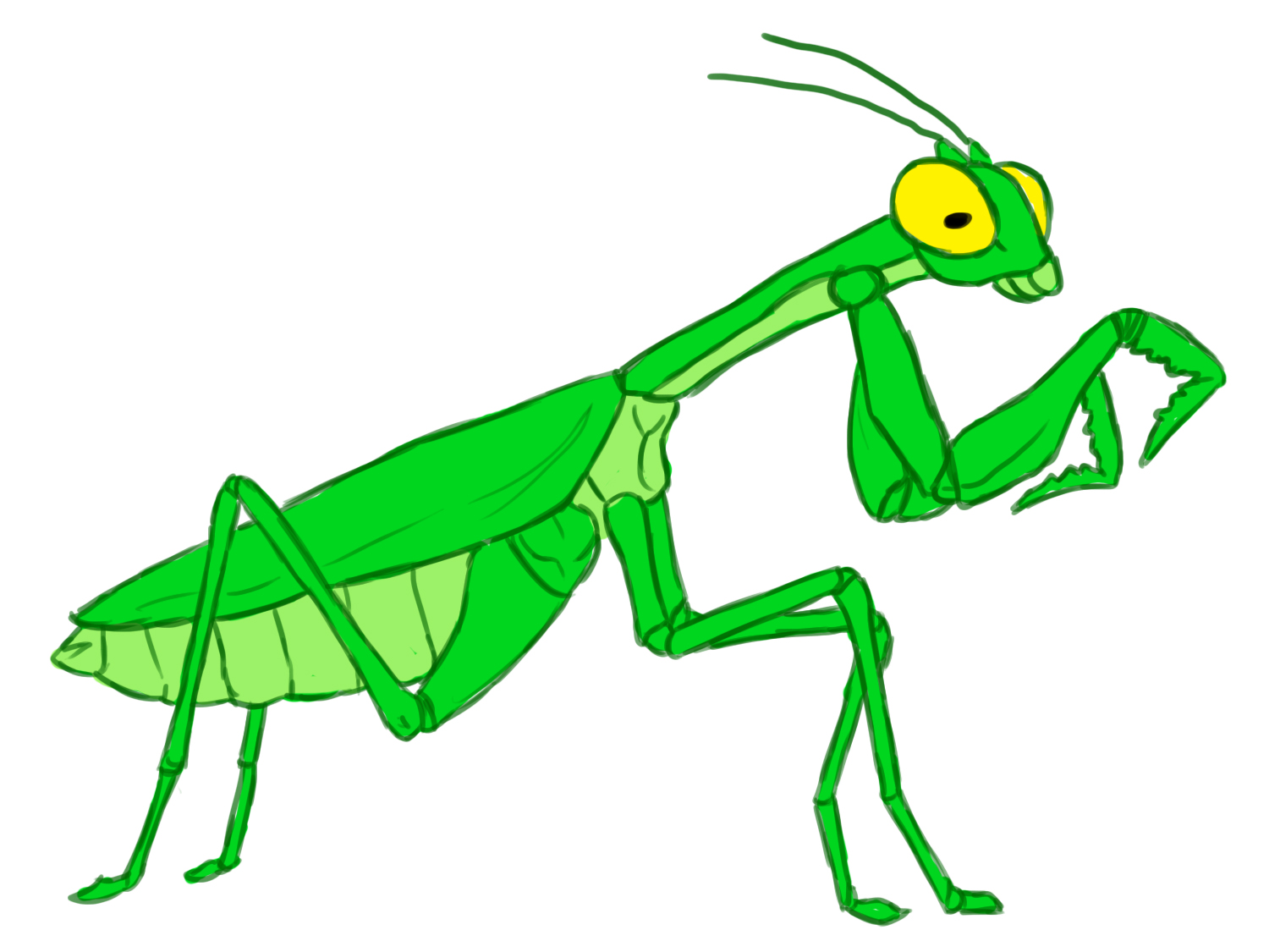 How to Draw a Praying Mantis: 12 Steps (with Pictures).