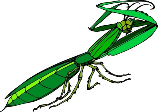 Mantis religiosa free vector download (11 Free vector) for.