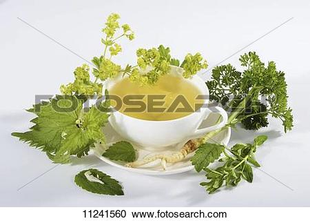 Stock Photography of A cup of herbal tea with ingredients (lady's.